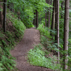 vision path